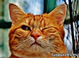 Gato guiñando ojo