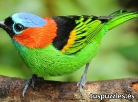 Pájaro de colores