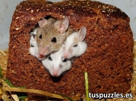 Ratones en el pan